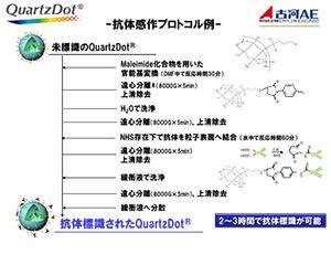 Quartz Dot/抗体感作プロトコル例